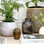 Décorez votre intérieur avec des plantes